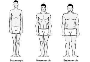 מבני גוף
